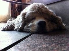 ゆかにべっちょりさせて眠るレディ子