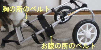 s-belt-IMG_0576