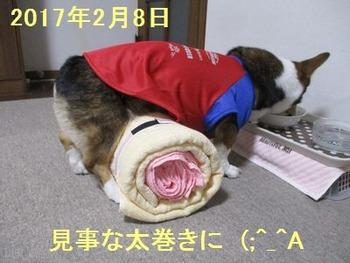 s-IMG_0973-hikaku