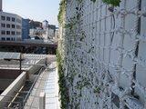mruyas-壁面緑化
