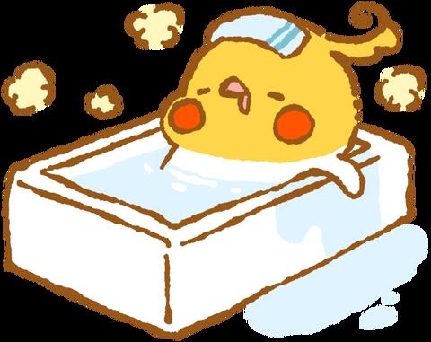 【フリー素材】お風呂でくつろぐオカメインコ