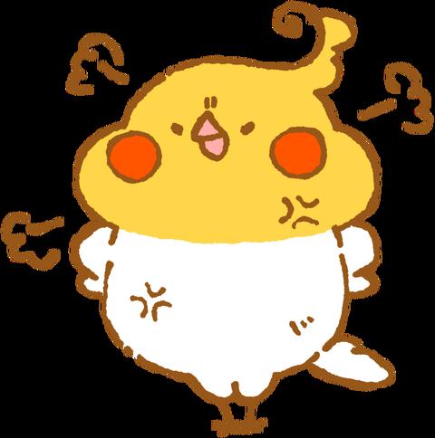 【フリー素材】ぷんすかオカメインコ