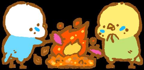 【フリー素材】たき火で焼き芋!セキセイインコ