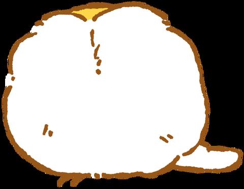 【フリー素材】熟睡オカメインコ