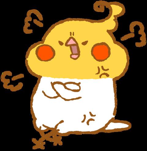 【フリー素材】ぷんぷん怒るオカメインコ