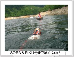 泳ぐラピ2