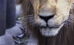 lion_comp_shrine_thumb