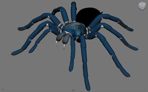 tarantula01