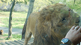 tama_zoo