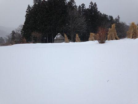 冬のデンデラ野