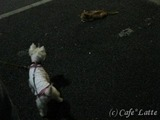 10/08/11 お散歩風景(2)