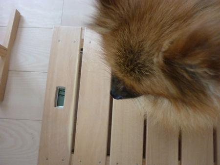 20120812-1kumako