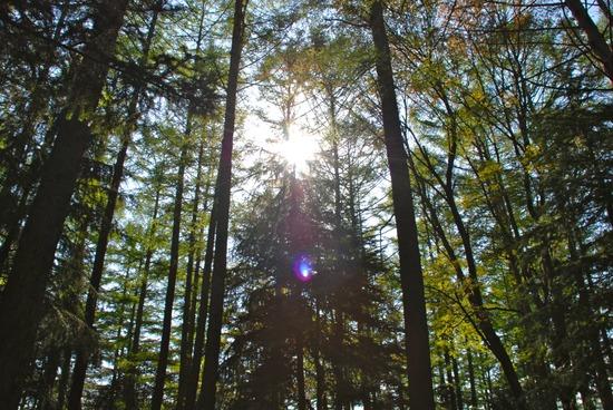 #趣 河口湖ニューブリッジキャンプ場に行きました
