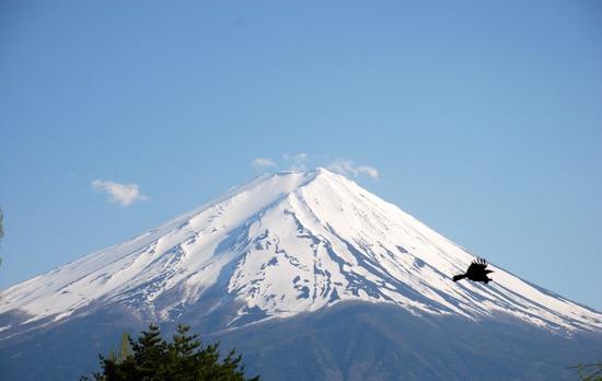 鳶と富士山