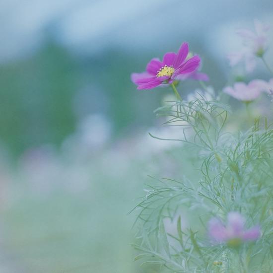 mamiya_home_01