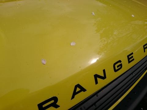 rangerover_sakura
