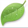Coda   Macのホームページ作成ソフト