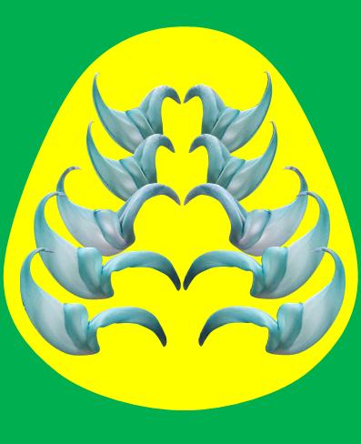 翡翠かずらの花
