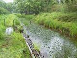 北川湿地 (5)