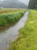 北川湿地 (11)