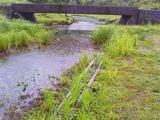 北川湿地 (4)