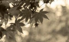"""処女と童貞の""""生本番セックス""""で豊作祈願! 果てるまでヤリ遂げれば御利益が… 西日本の知られざる秋の伝統行事"""