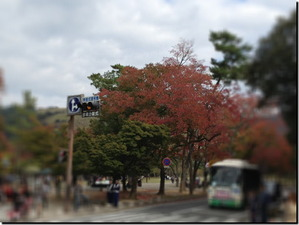 2012_11_6_le_parc_de_nara