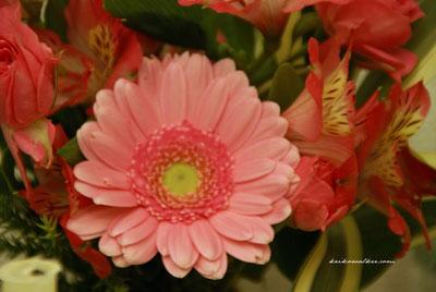 129907986487416125160_pinkflowers.jpg
