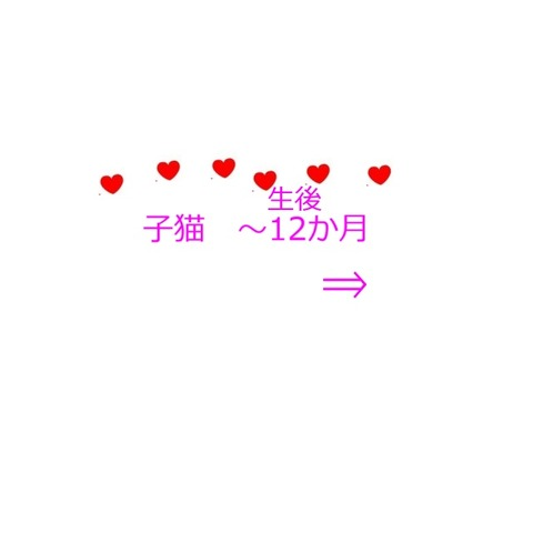 20181125_114040 - コピー - コピー - コピー - コピー - コピー (2)