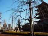 浅草寺からのスカイツリー1