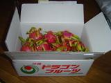 ドラゴンフルーツ箱