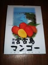 マンゴー箱