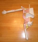 バドミントン・骨と筋肉の構造