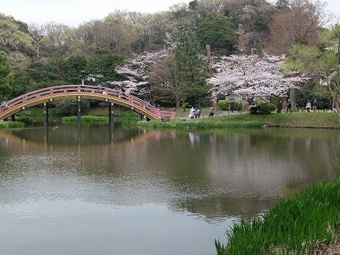 横浜_桜_2