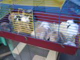 ウサギの檻