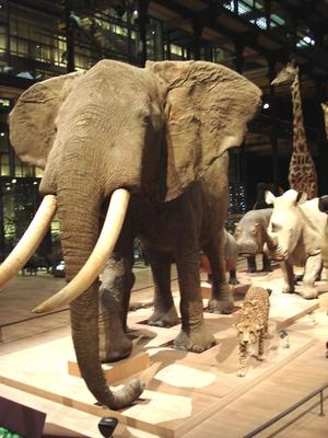 国立自然史博物館
