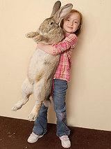bunny220_1609586f