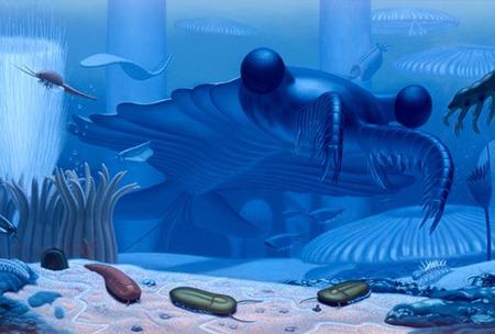 anomalocaris-canadensis-shrimp_28324_big
