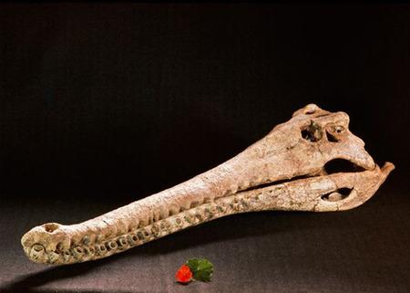 humans-ate-crocodiles-kenya_21172_big