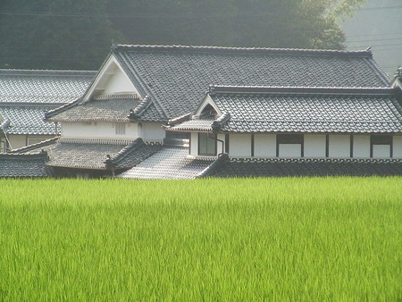 800px-Paddy_fields_Japan_0884