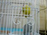 2010年02月21日_P1050092