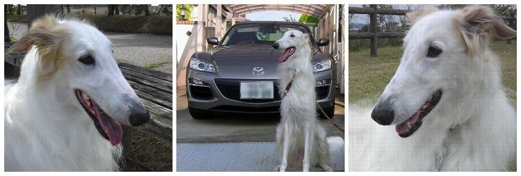 愛犬レオンと愛車