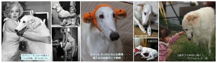 マリリン・モンローの愛犬・marilynmonroe