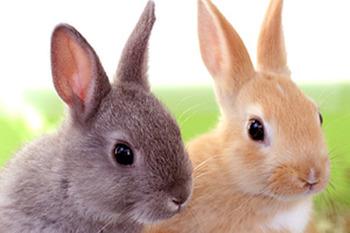 rabbit-image01