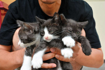 子猫3匹、神社に置き去り