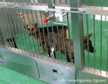 沖縄の犬たち