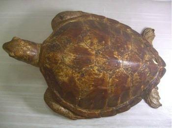 【鼈甲】ウミガメ 剥製 甲長44cm-画像2
