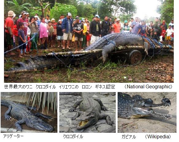 Giant-crocodile