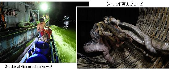 """サイエンスジャーナル2015年01月幻の巨大サメ「メガマウス」とは何か?沖縄の海岸で歯化石発見!夢の完全自動運転技術、実現への4つのステップ!鍵を握る""""人工知能""""インスリンを毒に使う貝を発見!魚を昏睡させて""""捕まえる""""アンボイナガイ芳香族化合物を自由自在に?6置換ベンゼン(HAB)の合成に初成功!未来の磁気メモリー?磁場をかけると原子レベルで電気分極をつくる新現象!日本にピッタリ!世界最大の水上メガソーラー建設、5000世帯分の電力を供給週刊 サイエンスジャーナル 2015.2.8号 シマウマの謎/魚竜の進化/第57回ノーベル物理学賞・化学賞・生理学医学賞/乱獲されるウミヘビシマウマの縞の謎解明か?模様は虫除け?気温と模様の意外な関係ジュラ紀、恐竜の時代、海の主役「魚竜」の進化史を変える新種化石発見!第57回ノーベル生理学医学賞 ダニエル・ボベット「クラーレ様筋弛緩剤の合成に関する研究」第57回ノーベル化学賞 アレクサンダー・トッド「ヌクレオチドとその補酵素に関する研究」第57回ノーベル物理学賞 楊・李・呉「弱い相互作用の""""パリティ対称性の破れ""""を発見」アジアで大量に乱獲される""""ウミヘビ""""!毒は貴重な心臓病治療薬週刊 サイエンスジャーナル 2015.2.1号 インフルエンザ/コウモリ/がんのホルモン療法/マリアナ海溝の新種魚/接触連星/光からスピン流流行中!インフルエンザと鳥インフルエンザ 生存率10%?カラス大量死の謎コウモリは仲間の食事の音を盗み聞きしていた!""""白い鼻症候群""""のその後がんを促進するホルモンが存在!抗アンドロゲン療法が膀胱がんの再発を抑制マリアナ海溝、水深8143mの海底に新種の魚(クサウオ科)発見!2つの恒星合体で新たな巨大恒星誕生か?くっつきすぎる近接連星・接触連星光からスピン流を生成する新原理発見!表面プラズモンからマグレノンを誘導                  なみたかし"""