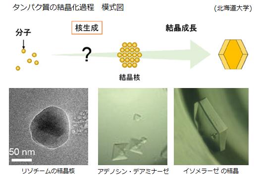世界初!タンパク質の結晶核ができる瞬間をとらえる!難しいタンパク質の結晶化解明に道